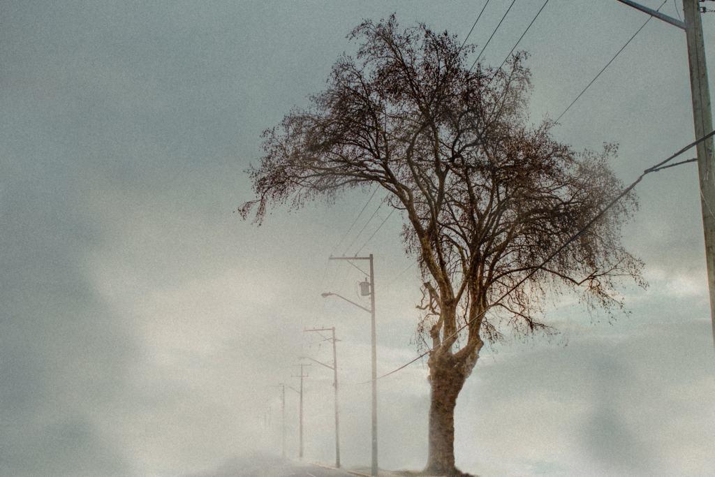 photo of the week Jade Lyf Cowichan tree shot