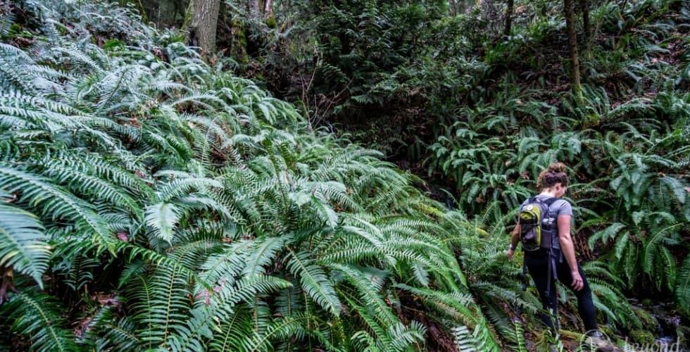 Hiking in Cowichan: Hiking Maple Mountain.