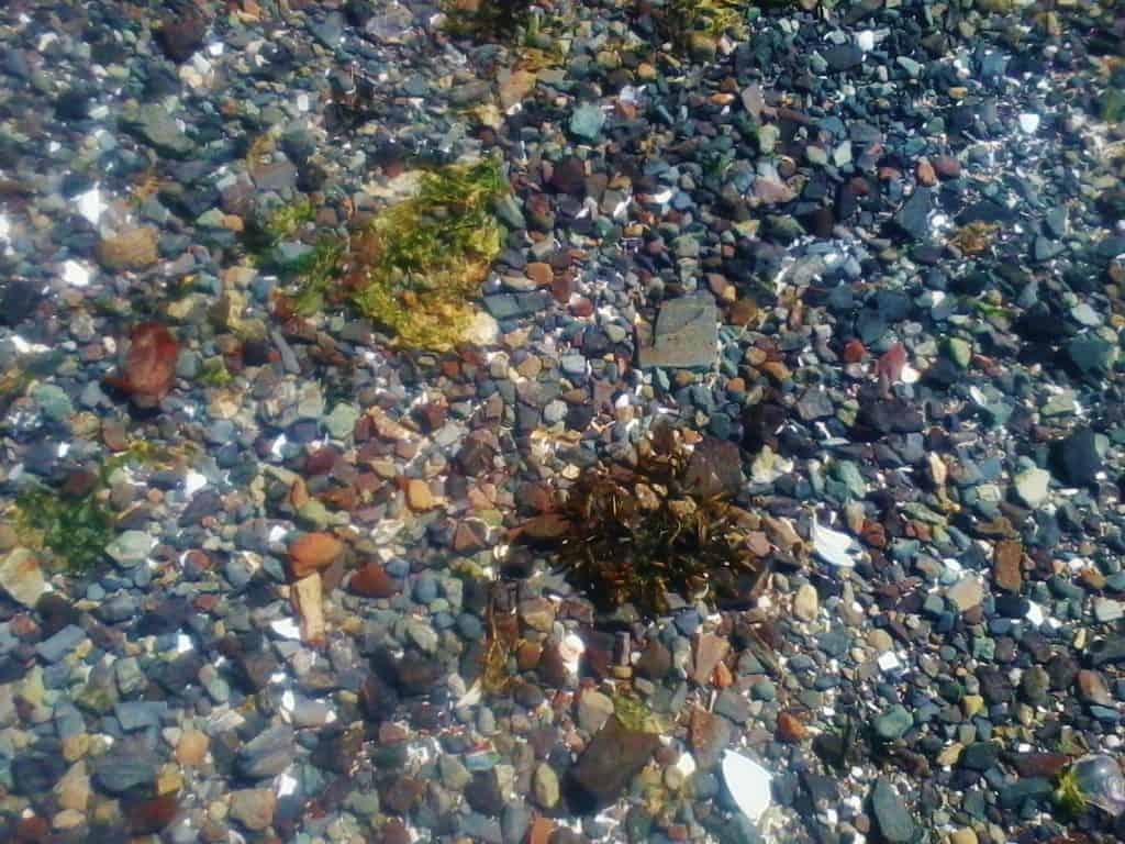 the bottom of the Salish sea