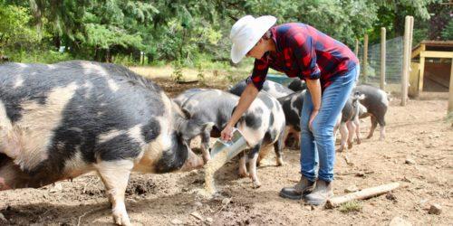 farm lease land matching program digable roots duncan